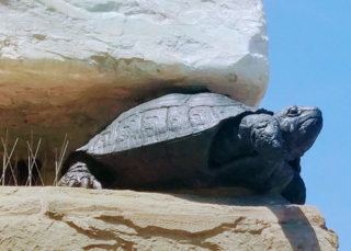 De schildpad van Cosimo